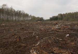 Tree cutting deforestation