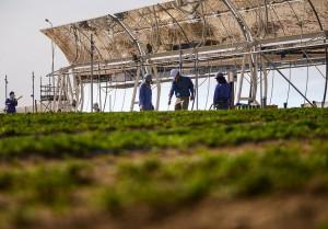 Sahara-Forest-Project-solceller-og-avling