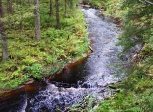 Forest river Agalatovo Ohta