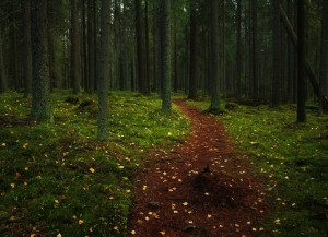 Forest wesern finland