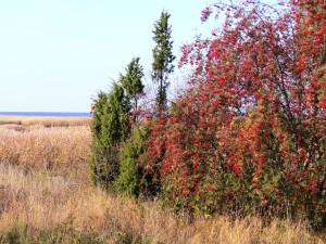 Kurgalskiy reserve