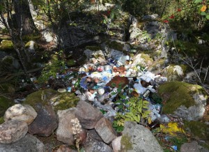 Forest waste trash dump