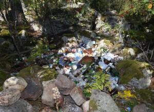 Forest waste trash dump