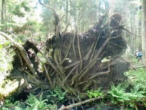 Kurgalskiy natural reserve zakaznik