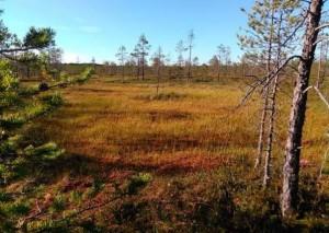 Leningrad obl region reserve