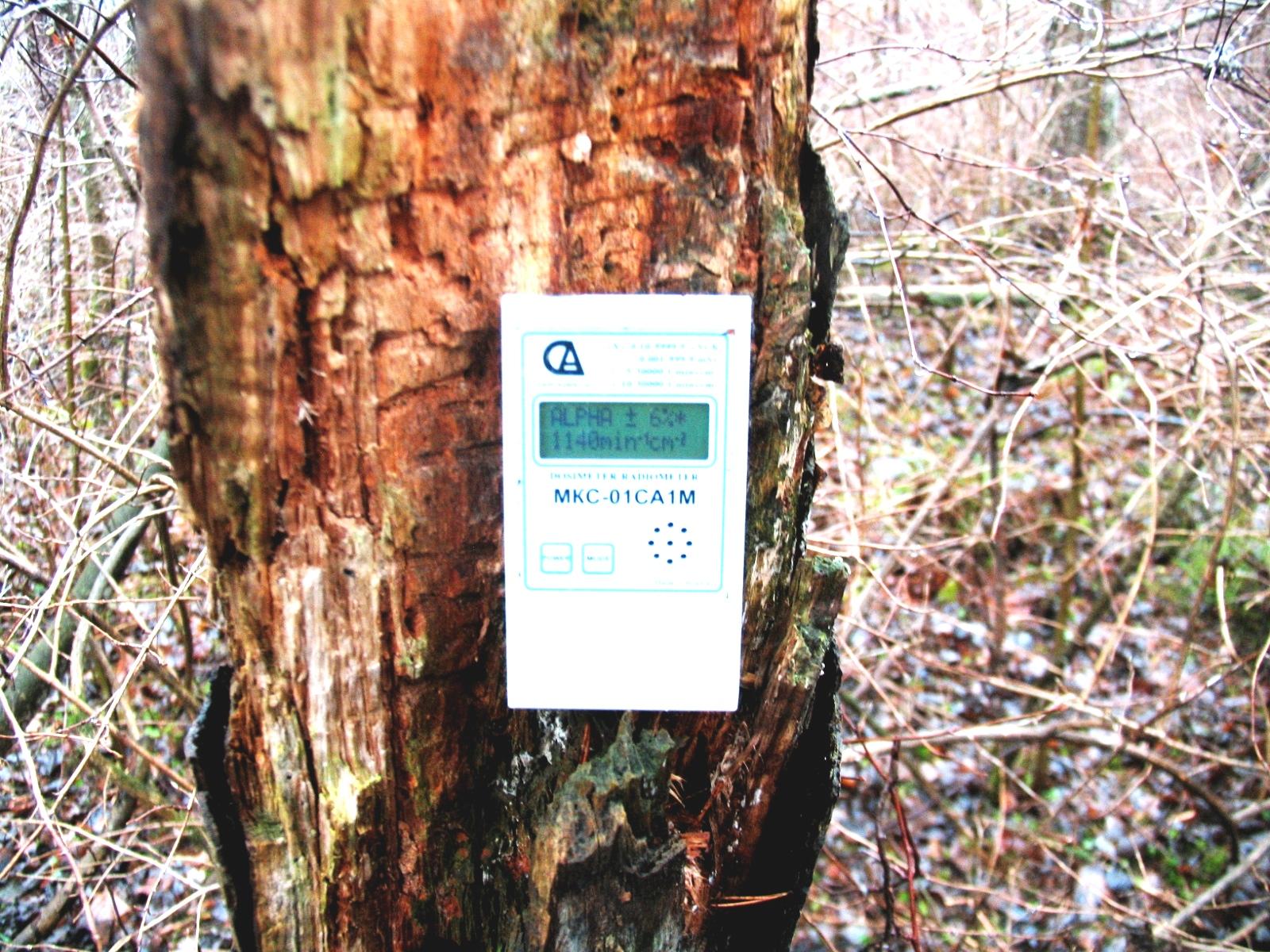Показания дозиметра на трухлявой лесине