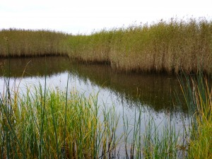 Рамсарское водно-болотное угодье