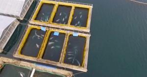 whale prison