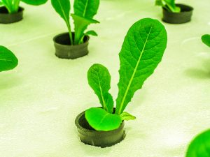 farm-green-food-hydroponic-agriculture-garden-1440677-pxhere.com