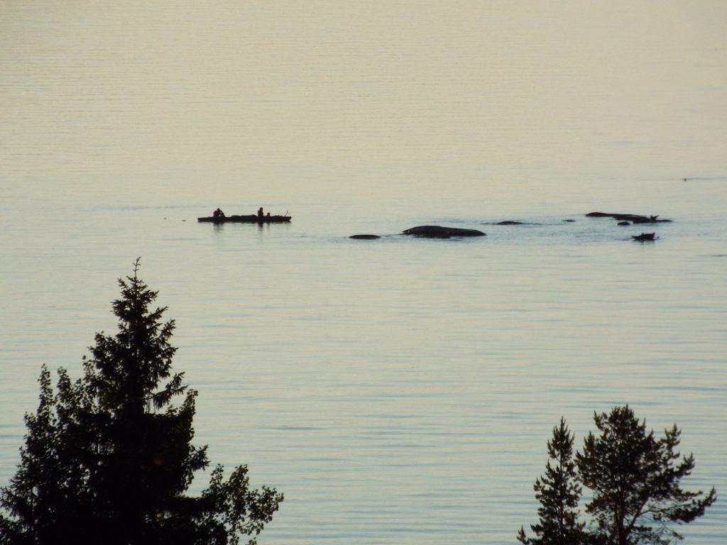 Люди в байдарке спугнули с луды 30 тюленей (последние особи видны справа). Животные не вернутся несколько дней (Влада Шахназарова)