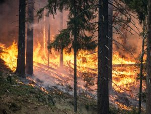 forest-fire-1493436144fp6